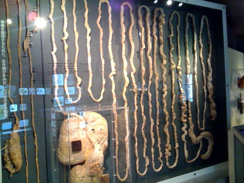 国立科学博物館 大恐竜展_f0011179_7481187.jpg