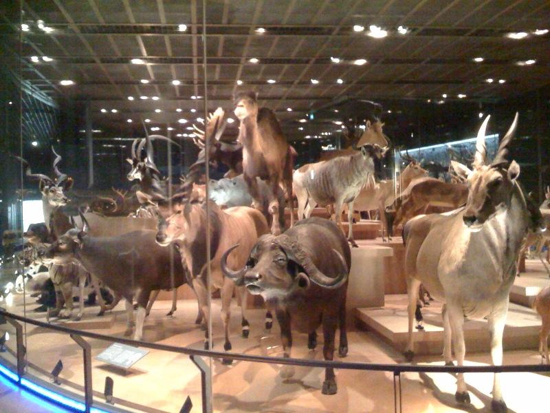 国立科学博物館 大恐竜展_f0011179_7495298.jpg