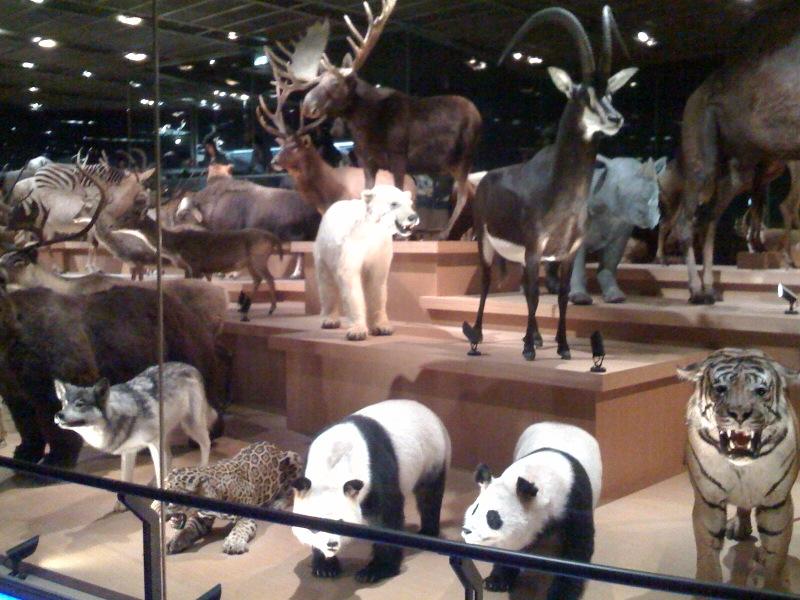国立科学博物館 大恐竜展_f0011179_7502378.jpg