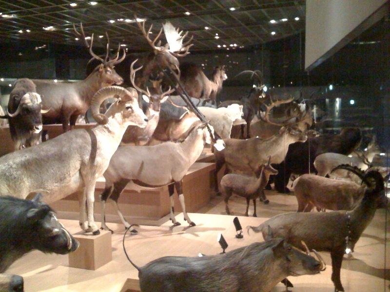 国立科学博物館 大恐竜展_f0011179_7505246.jpg