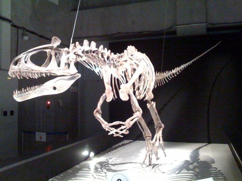 国立科学博物館 大恐竜展_f0011179_756042.jpg