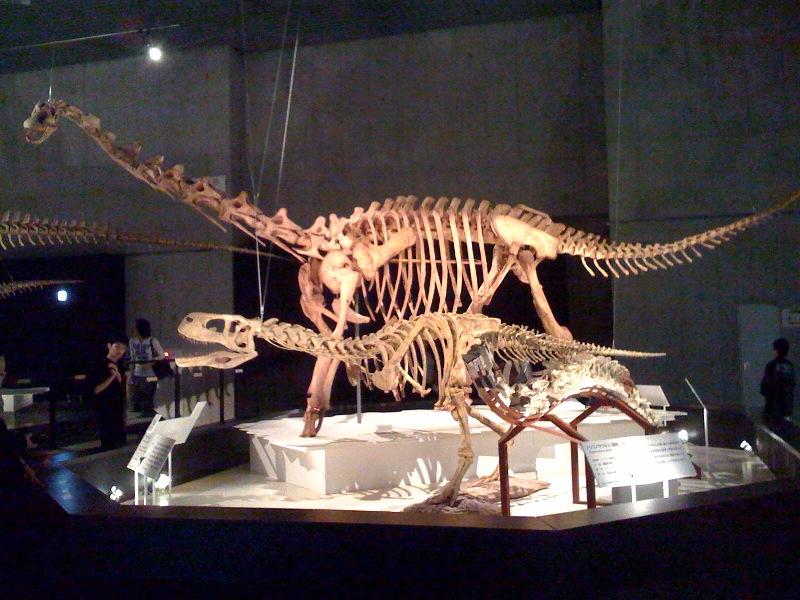 国立科学博物館 大恐竜展_f0011179_7573655.jpg