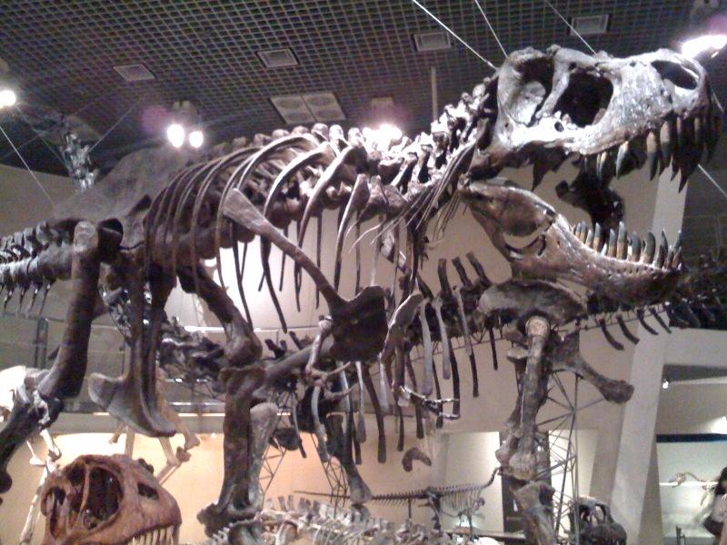 国立科学博物館 大恐竜展_f0011179_7585975.jpg