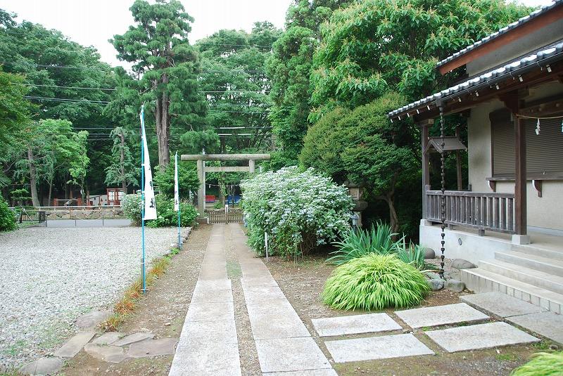 神社の紫陽花(夕方)_c0187781_231055100.jpg