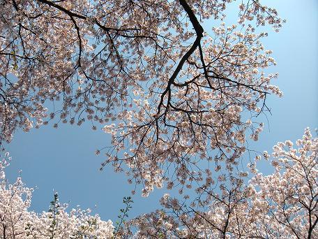春の日_c0128489_1251684.jpg