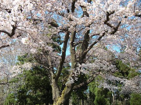 春の日_c0128489_1255340.jpg