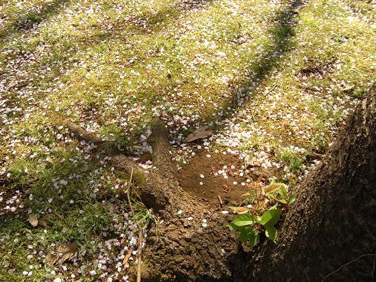春の日_c0128489_1272080.jpg