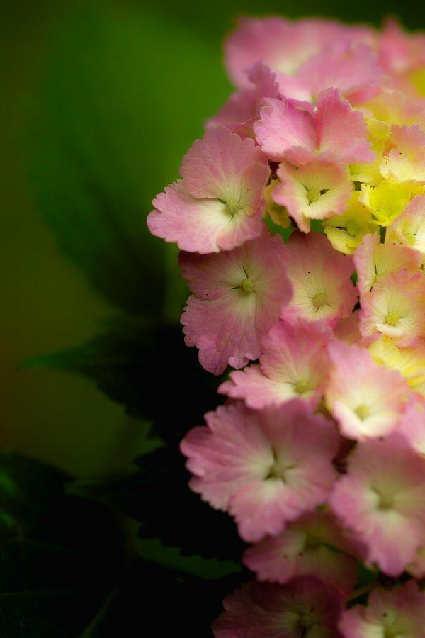 紫陽花とお散歩・・・・その2_c0124795_21582232.jpg