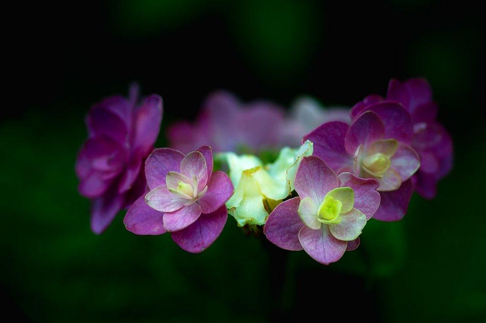 紫陽花とお散歩・・・・その2_c0124795_21583577.jpg