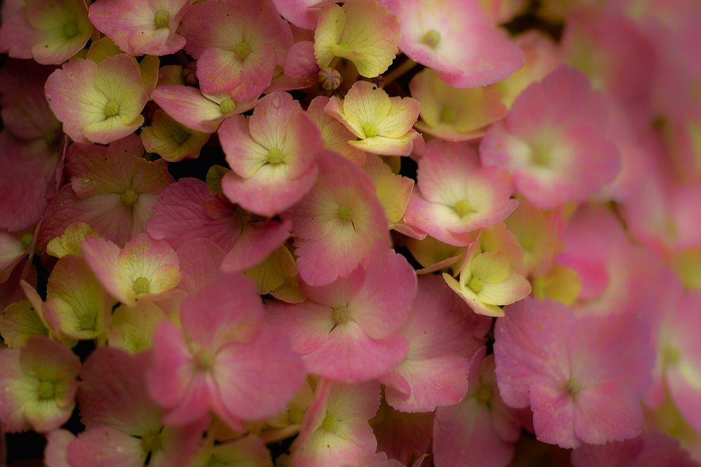 紫陽花とお散歩・・・・その2_c0124795_2159664.jpg