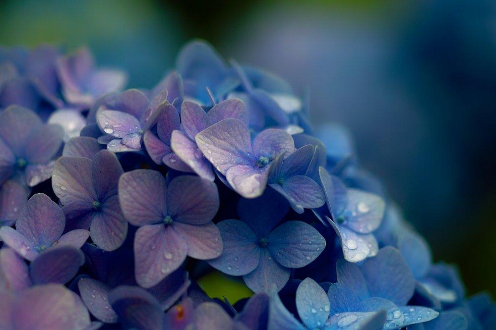 紫陽花とお散歩・・・・その2_c0124795_2222268.jpg