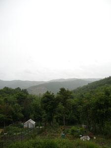 雨降りユキちゃん_f0106597_17354782.jpg