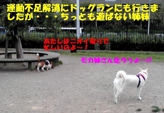 f0121712_1530913.jpg