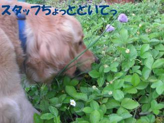 f0170713_100418.jpg