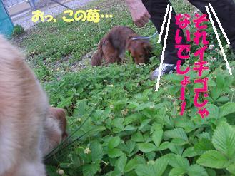 f0170713_10174887.jpg