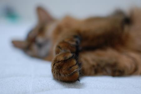ネコの習性考_f0085219_9152990.jpg