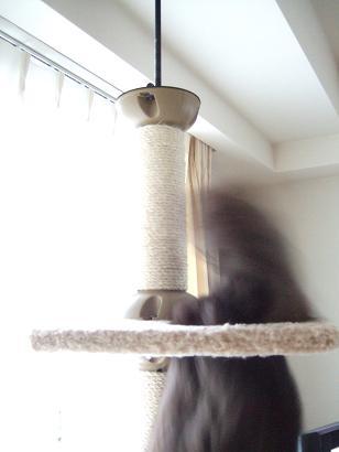 ネコの習性考_f0085219_9242682.jpg