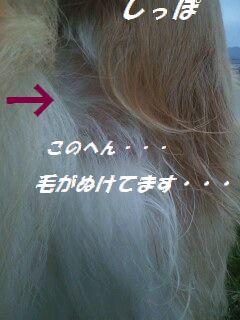b0127531_10413290.jpg