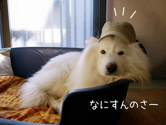犬の気持ち_c0062832_15392170.jpg