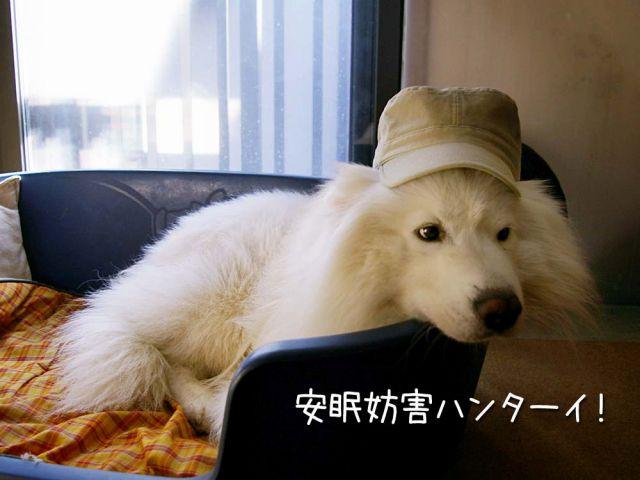 犬の気持ち_c0062832_15392644.jpg