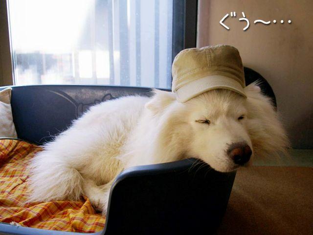 犬の気持ち_c0062832_15393294.jpg