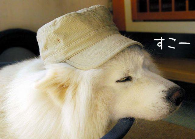 犬の気持ち_c0062832_15393763.jpg