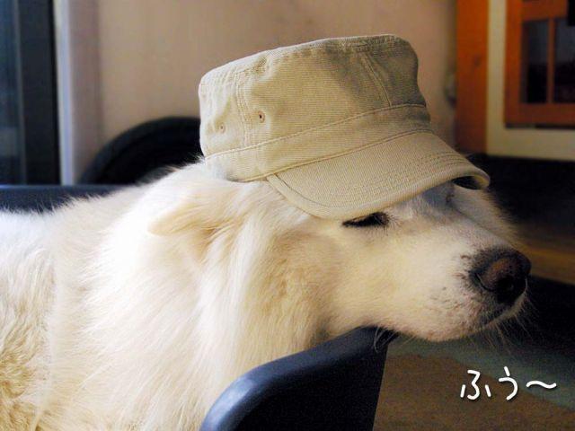 犬の気持ち_c0062832_15394294.jpg