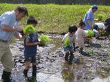 たんぼの学校と食育バーベキュー_e0070152_235272.jpg