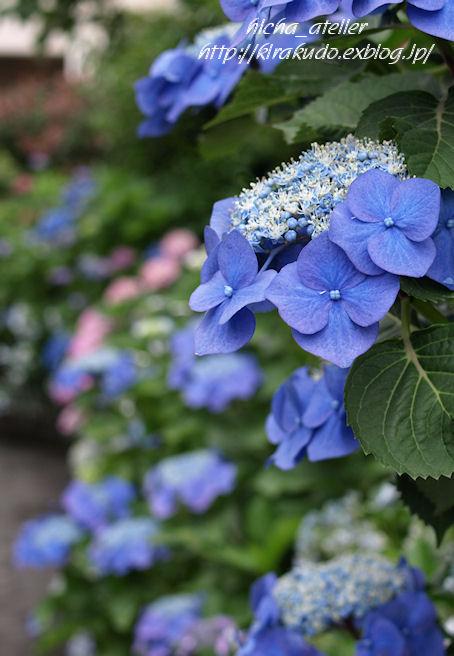 雨後の花見 @ 堀切菖蒲園、白山神社_a0073065_2216384.jpg