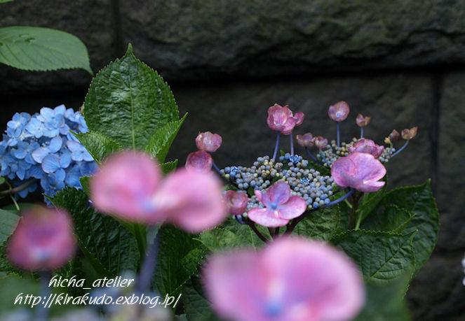 雨後の花見 @ 堀切菖蒲園、白山神社_a0073065_2222016.jpg