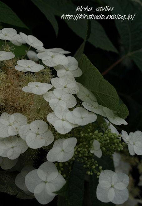 雨後の花見 @ 堀切菖蒲園、白山神社_a0073065_22221670.jpg