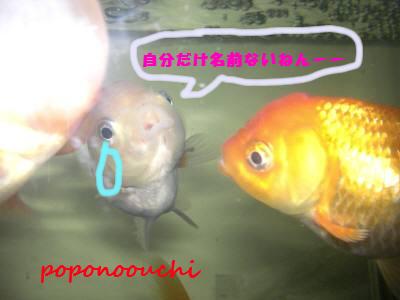 b0183076_1818578.jpg