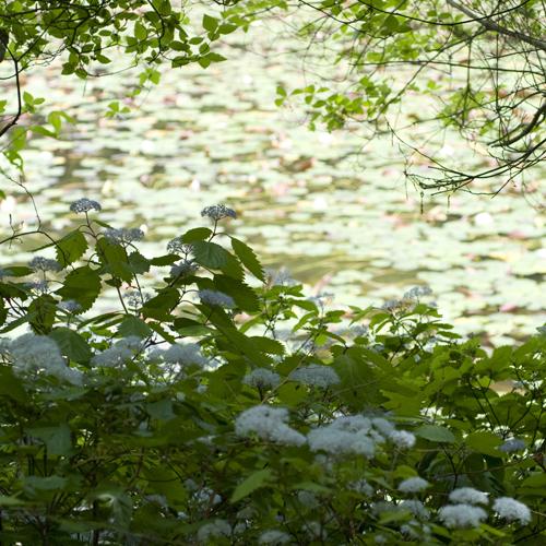 極楽寺山 蛇の池の睡蓮_f0099102_23142234.jpg