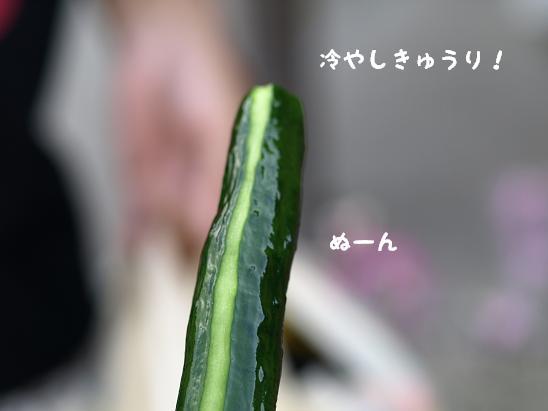 f0133316_037211.jpg