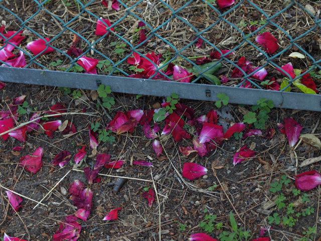 薔薇のある公園~閉じられた世界~_e0169421_14284556.jpg