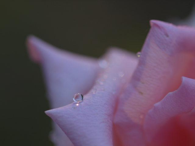 薔薇のある公園~閉じられた世界~_e0169421_14295014.jpg