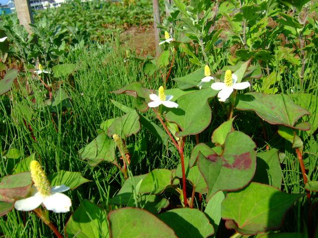 散歩の途中で.....綺麗な花が満開!_b0137932_10463343.jpg