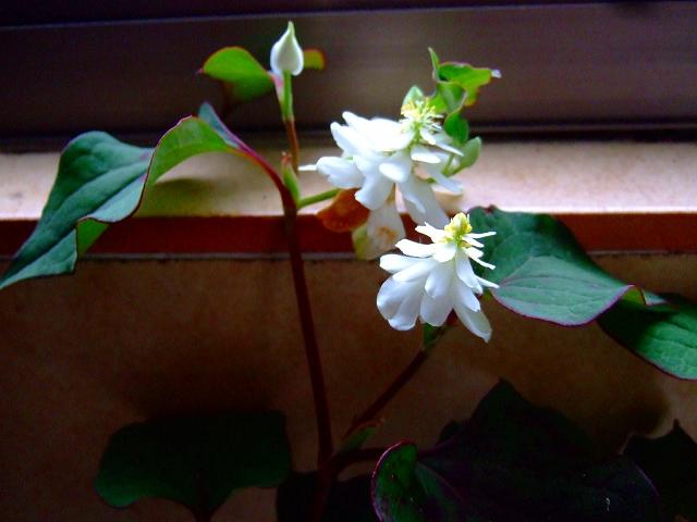 散歩の途中で.....綺麗な花が満開!_b0137932_10493213.jpg