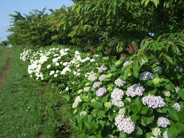 散歩の途中で.....綺麗な花が満開!_b0137932_105019100.jpg