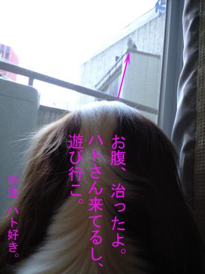 a0120944_10371297.jpg