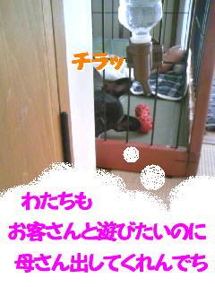 b0182763_2385852.jpg