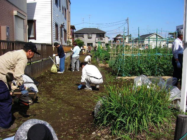 ズッキーニを収穫しました_c0053863_11305860.jpg