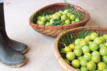 日曜日 梅の収穫。_f0000163_20463270.jpg