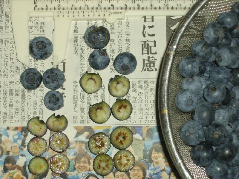 ブラッデンとブルータの果実切断面@サザンハイブッシュ系ブルーベリー_f0018078_17404868.jpg