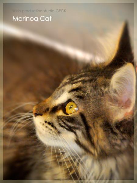 Topaz Cat\'s-eye ・・・_d0147591_19563127.jpg