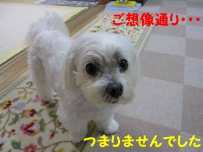 f0145192_20411014.jpg