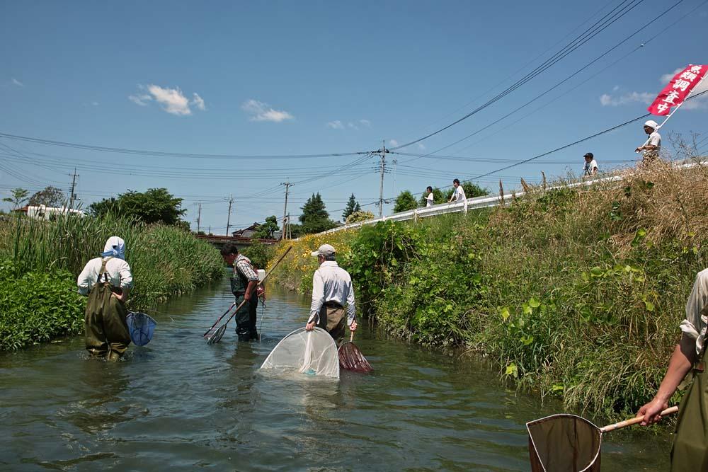 """今回は、群馬県で天然記念物に指定されている""""ヤリタナゴ""""保護活動の一環で... 害魚駆除"""