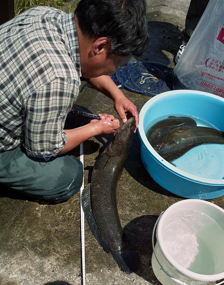 害魚駆除_c0095801_20291432.jpg