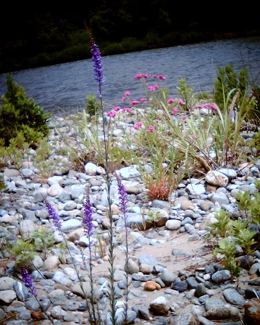 魚野川の花々_c0188809_19242025.jpg