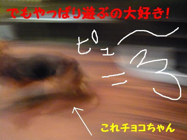 b0130018_1248279.jpg